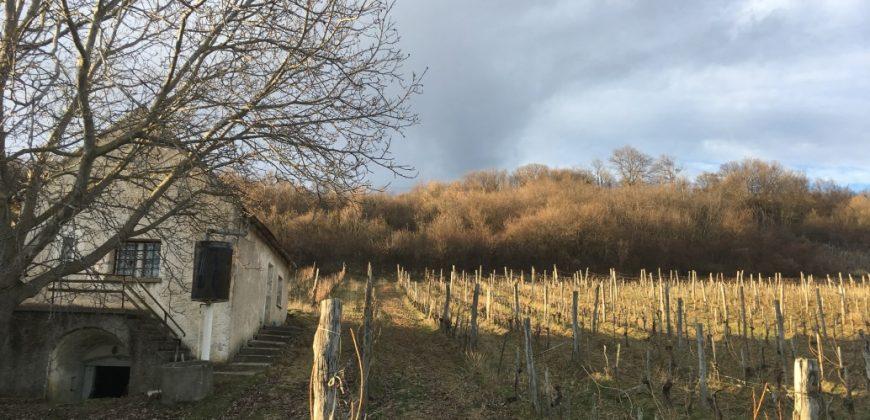 Eladó családi Ház 3534 Balatoncsicsó, a szőlős ékszerdoboz (Veszprém m.) #13404
