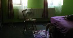 Eladó Ház, Tanya, Farm 5476 Szelevény (Jász-Nagykun-Szolnok m.) Regisztrált Vevőinknek #14464